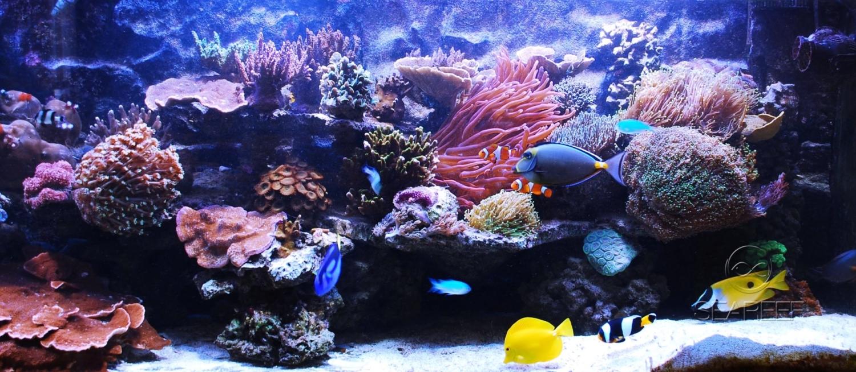 Mořské akvárium v kanceláři o objemu 1000 litrů.