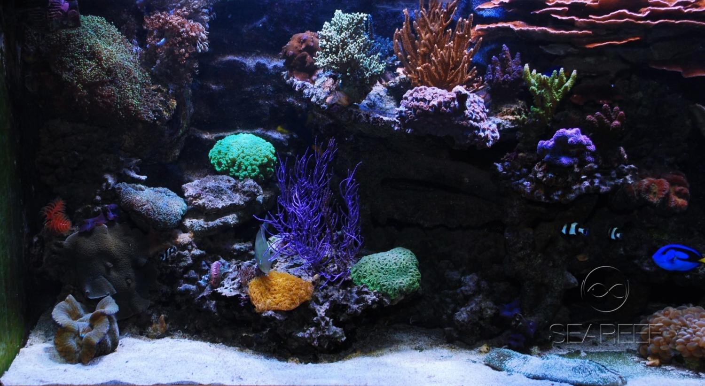 Mořské akvárium 1200 litrů, koráli, mix útesových ryb