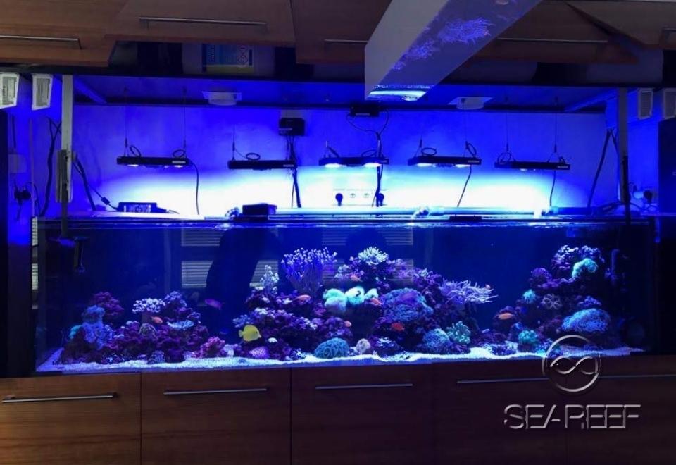 Mořské akvárium jako doplněk kanceláře ředitele společnosti. Objem 900 l.