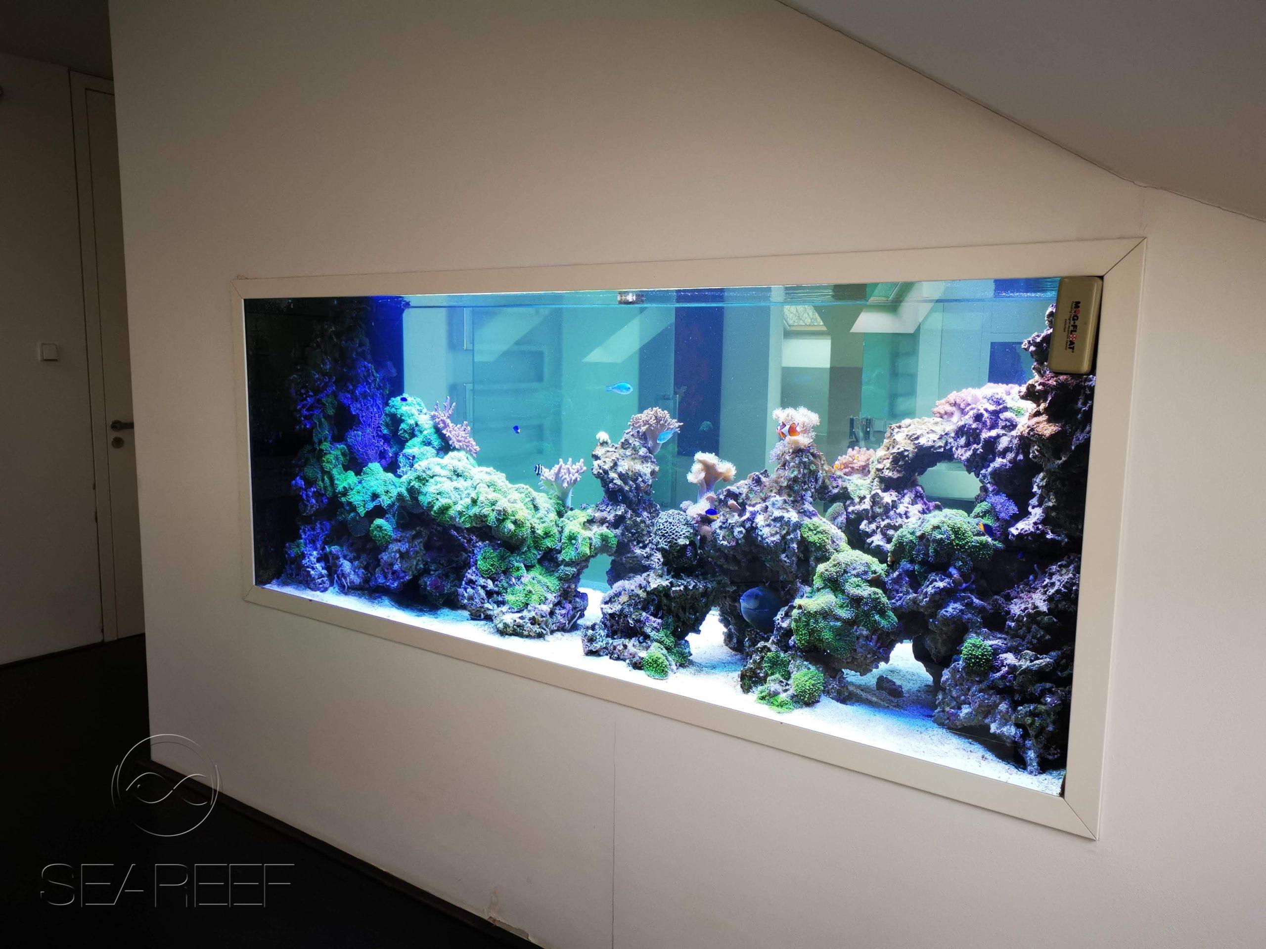 Mořské akvárium na míru interiéru o objemu 2280 litrů, s koráli a rybami.