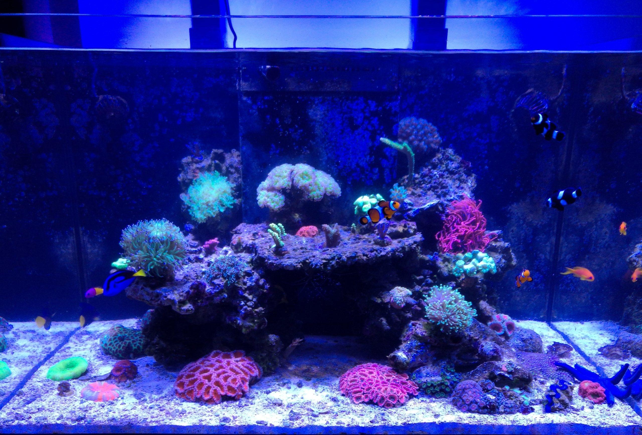 Mořské akvárium - komplet Red Sea reefer 250