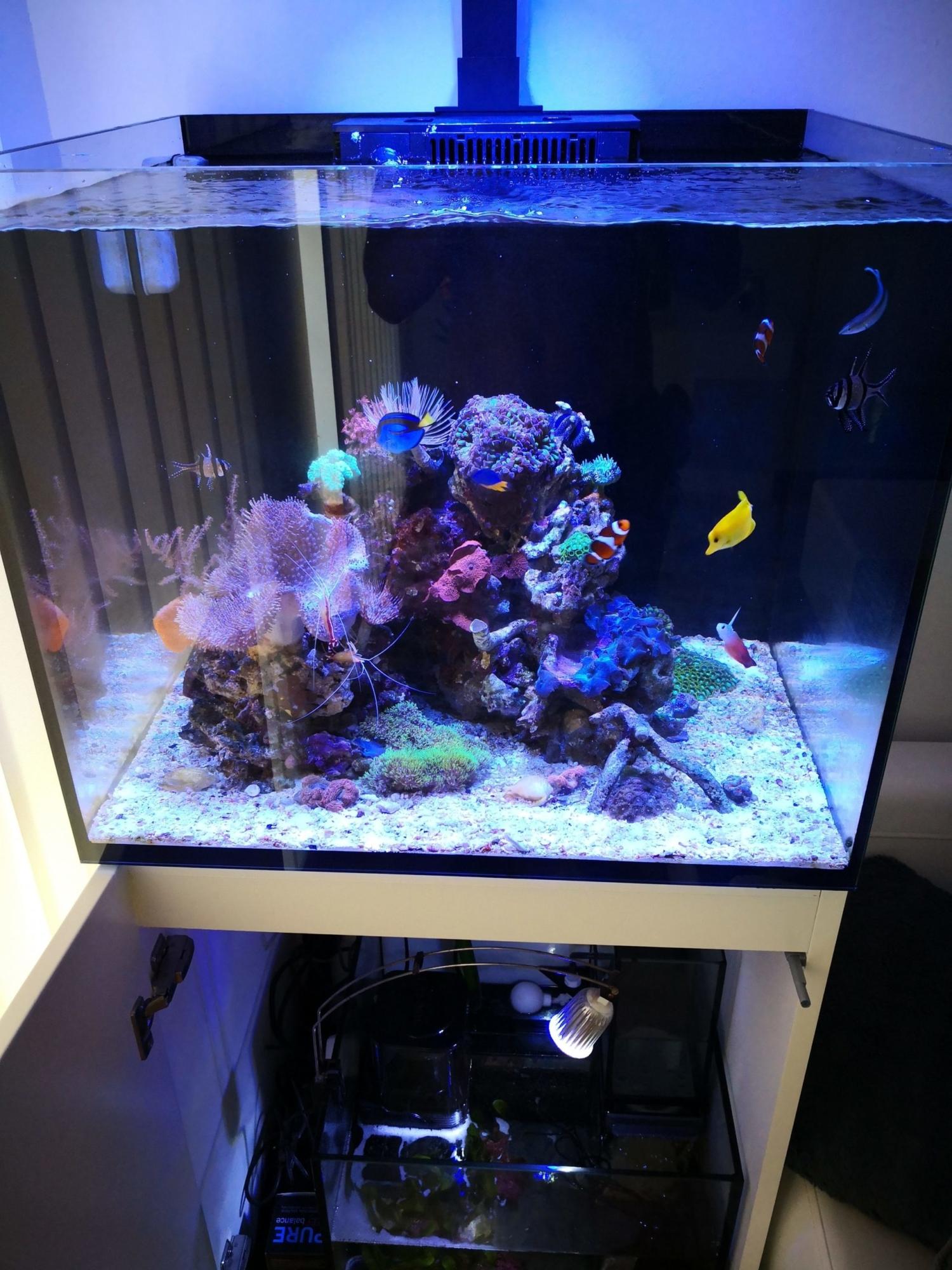 Mořské akvárium - komplet Red Sea reefer 170