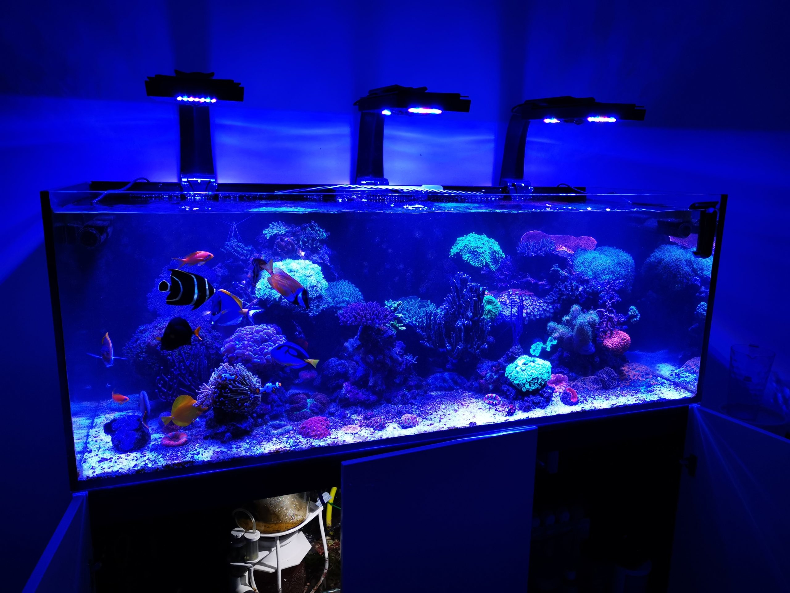 Mořské akvárium - komplet Red Sea reefer 450