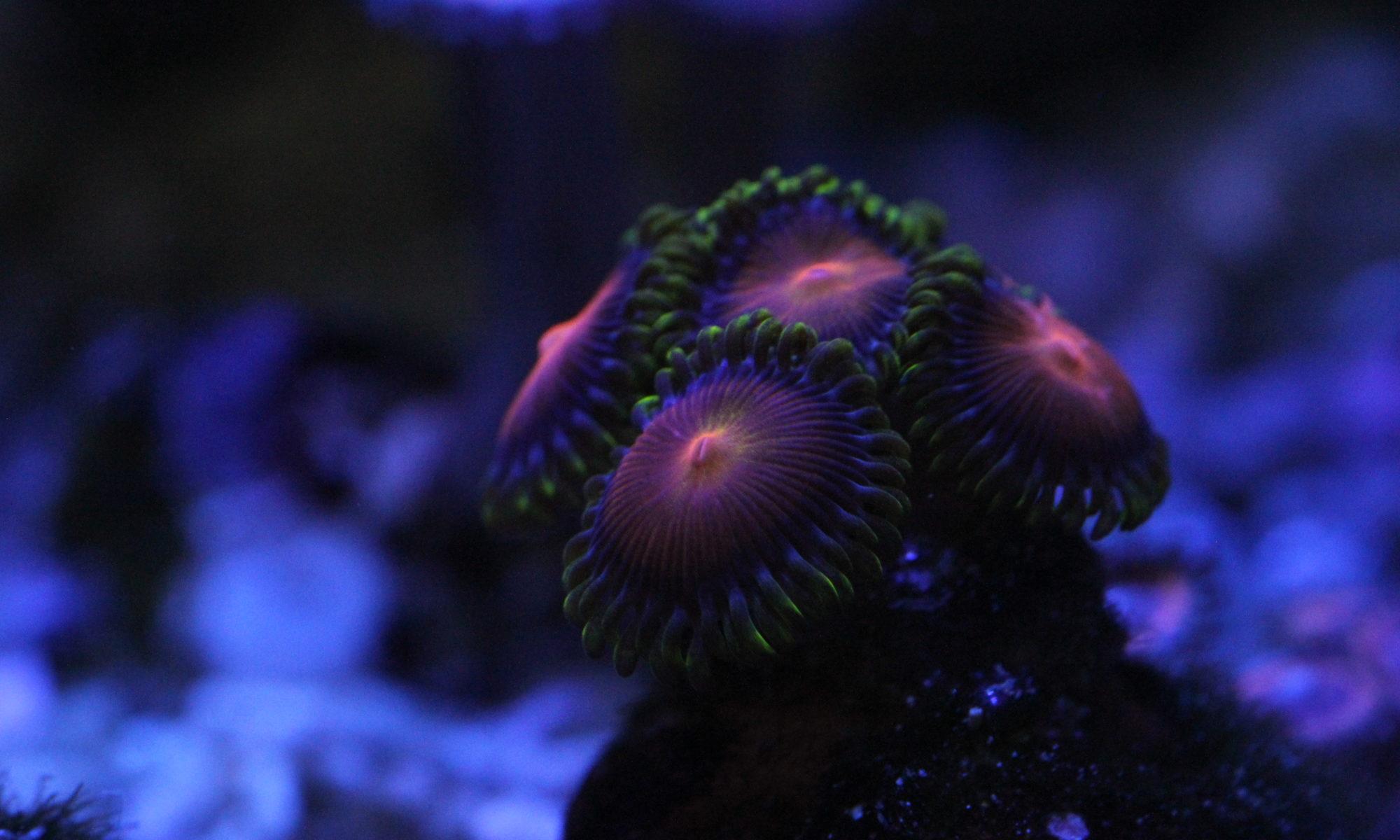 Mořské akvárium na míru by SeaReef s.r.o.