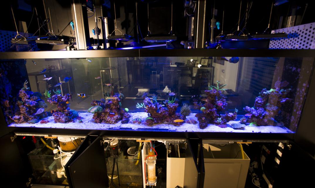 Mořské průhledové akvárium v kanceláři společnosti navržené pro korály a ryby.