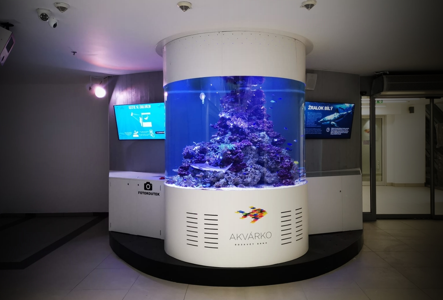 Veřejné útesové akvárium se žralokem