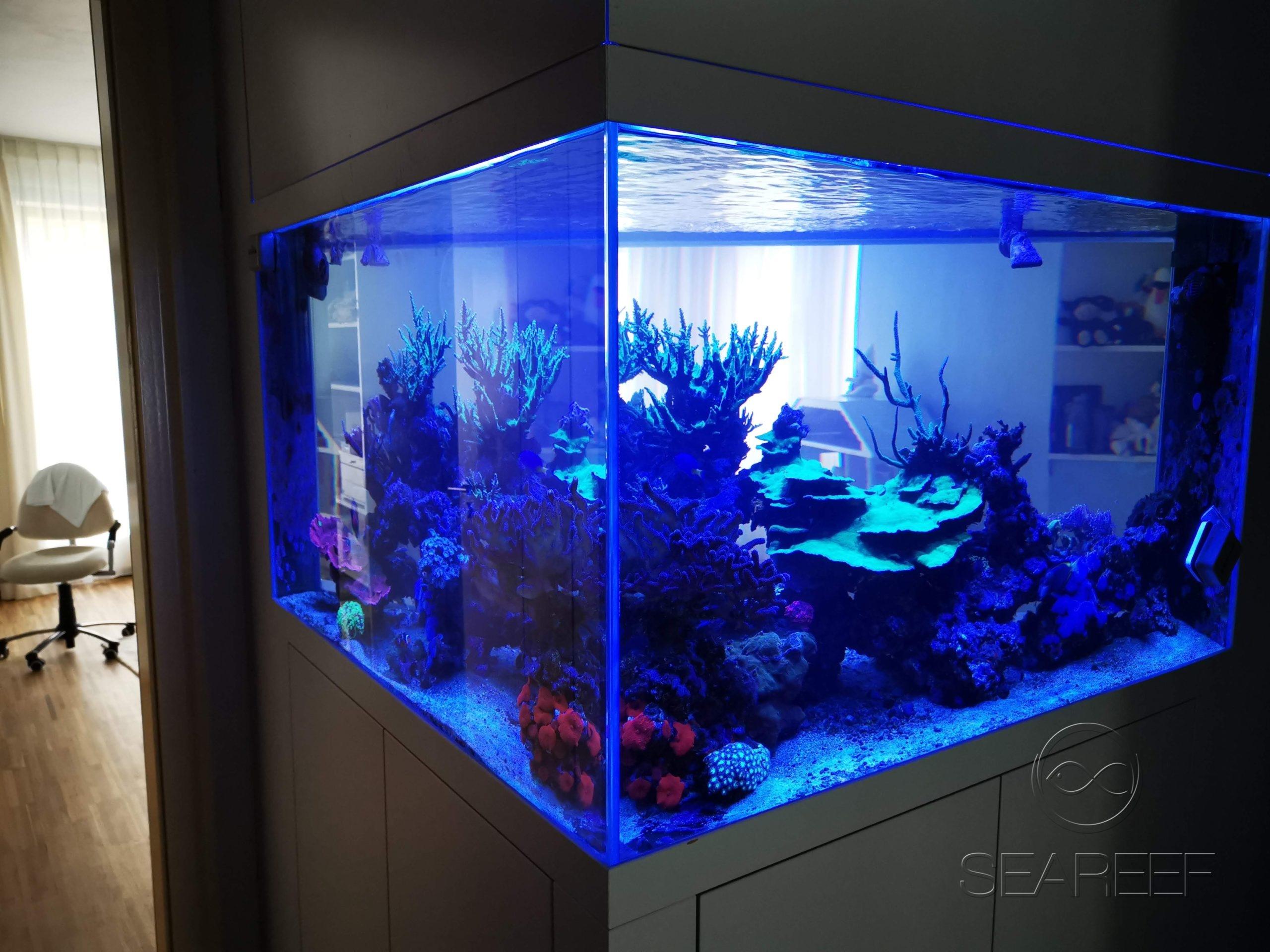 Mořské akvárium na míru doplňující design interiéru bytu obsahující korály a útesové ryby.