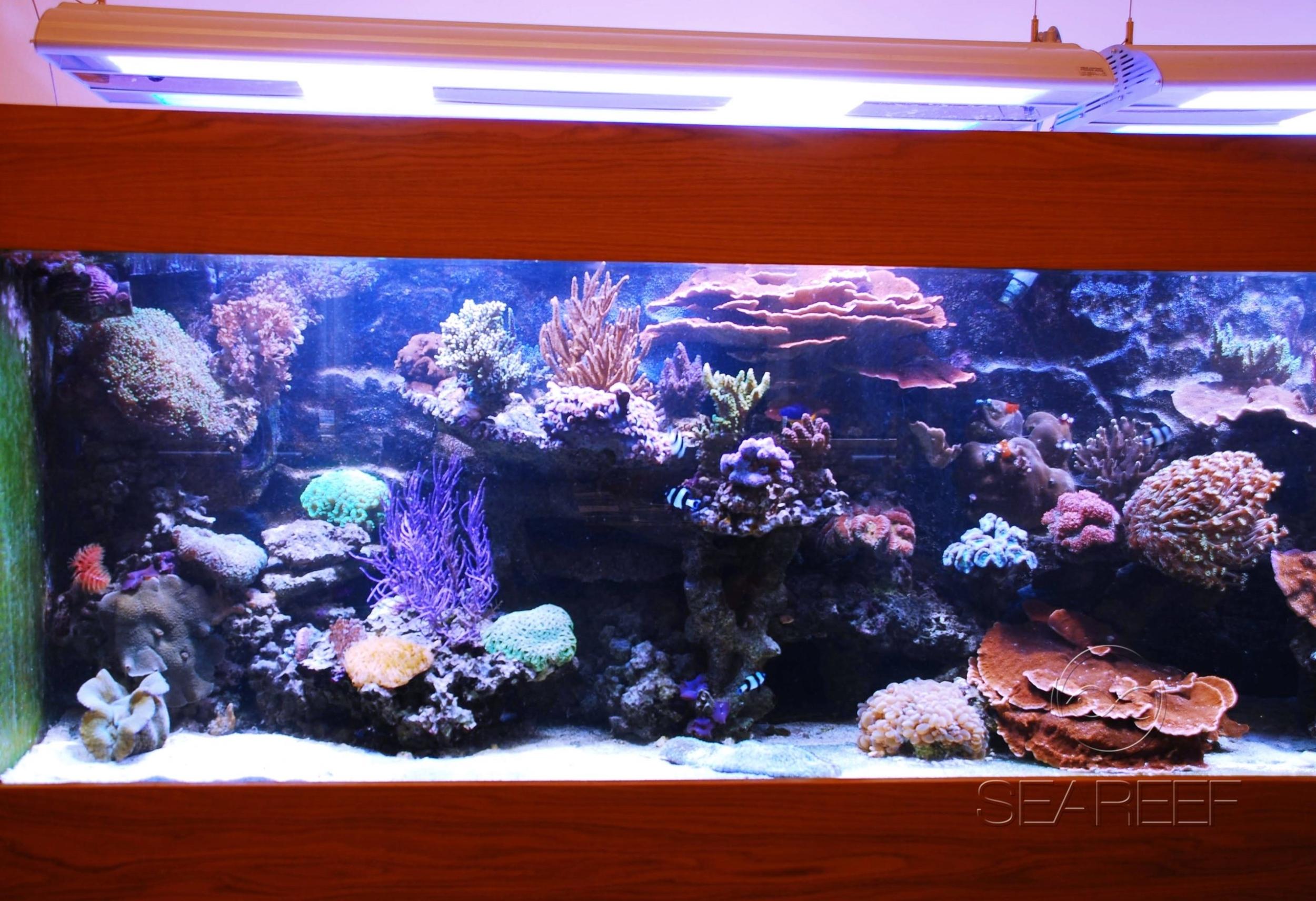 Mořské akvárium o objemu 1000 litrů.