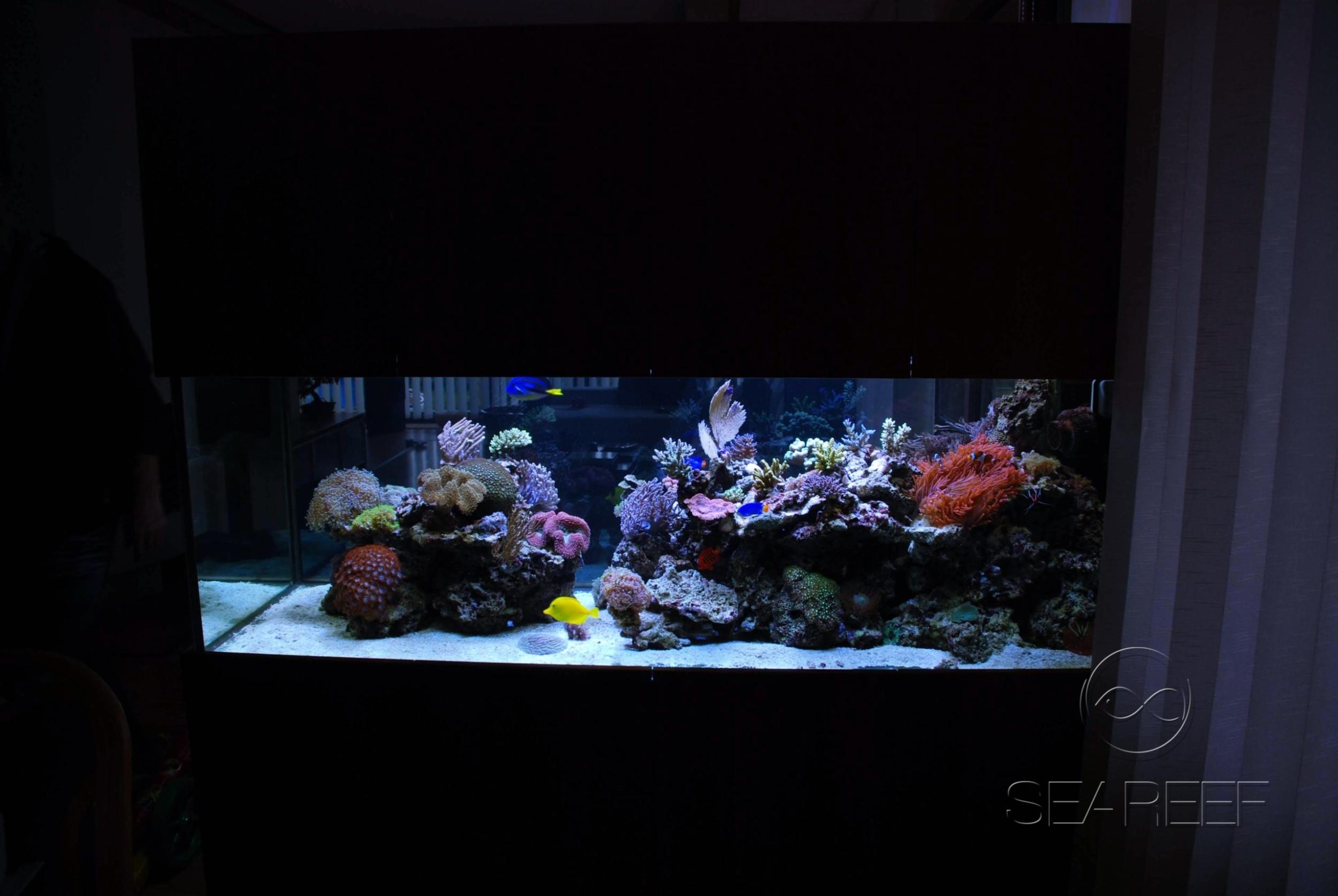 Mořské 700l akvárium na míru s korály a rybami.