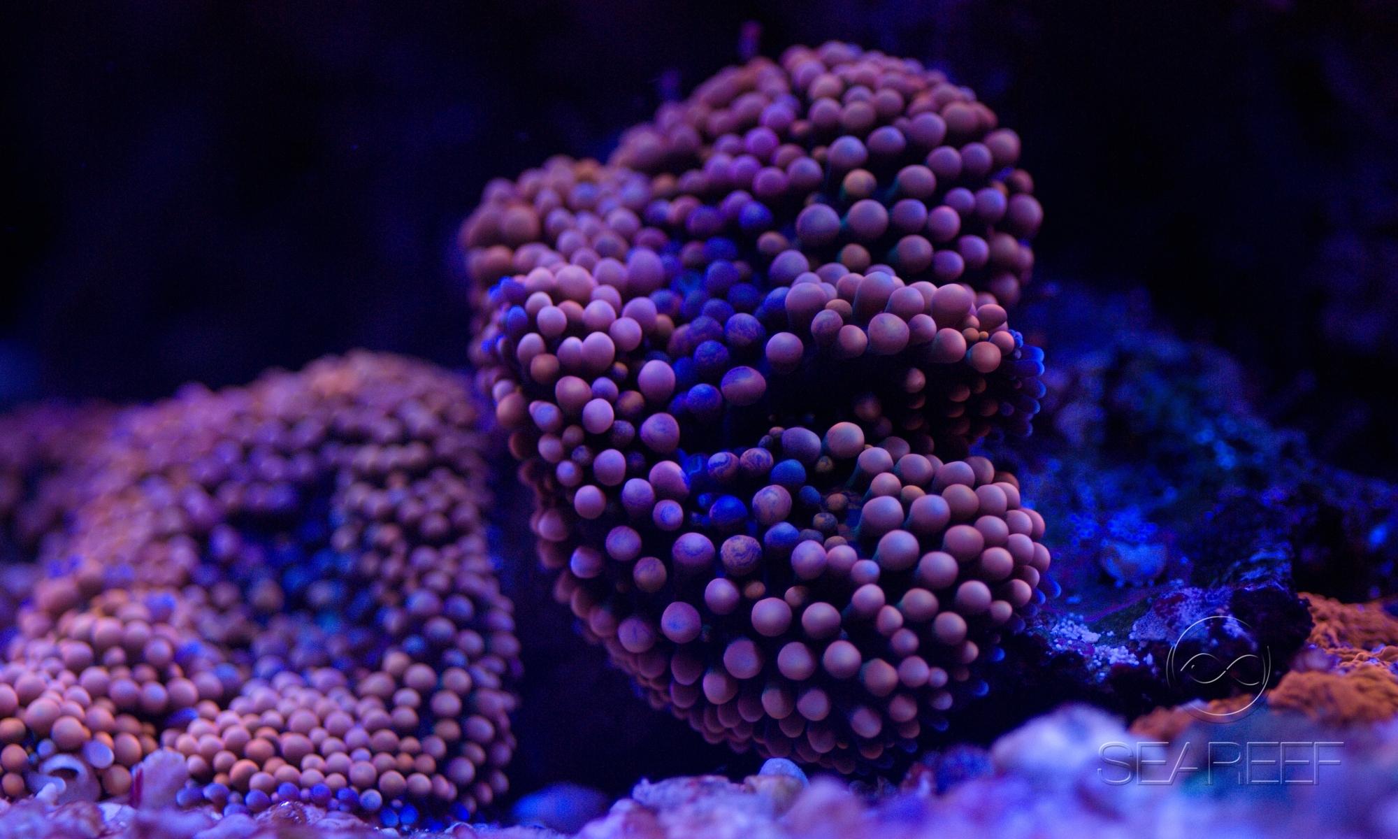 SEAREEF - Mořská akvária na míru